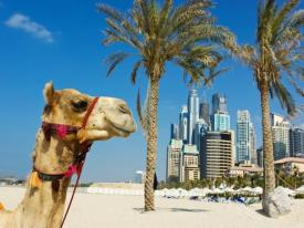camello.jpg
