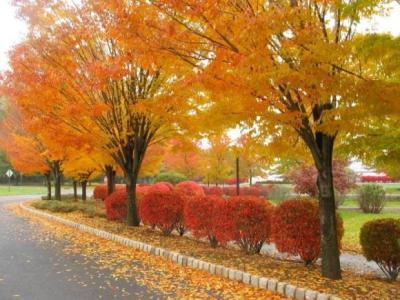 kuru-yapraklar-arasinda-800x600.jpg